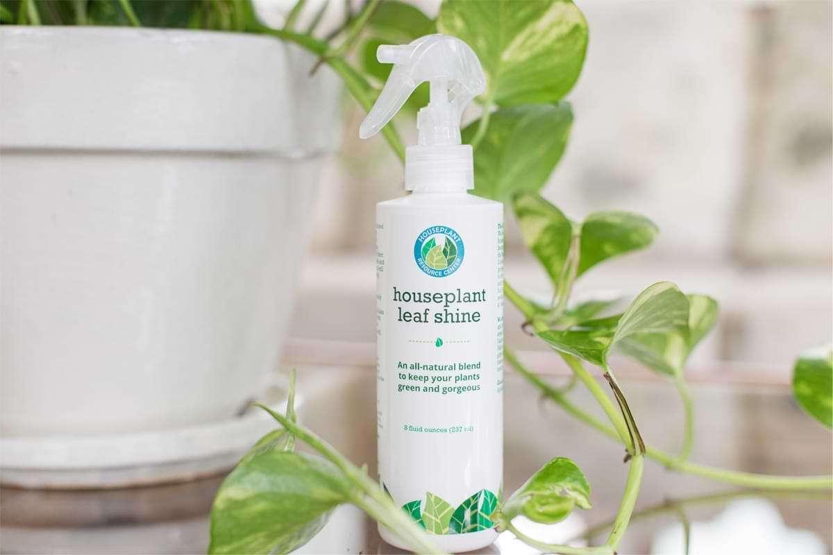 Houseplant-Leaf-Shine-1
