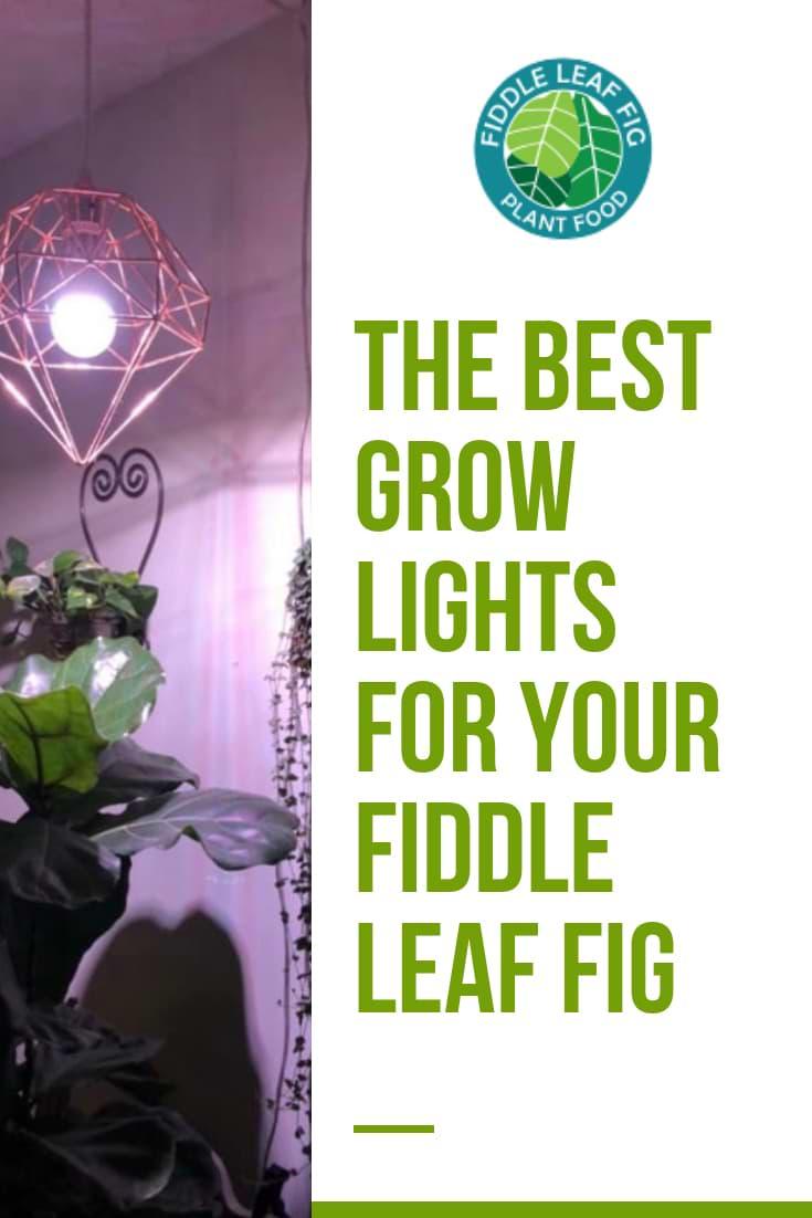 Best Grow Lights for Your Fiddle Leaf Fig