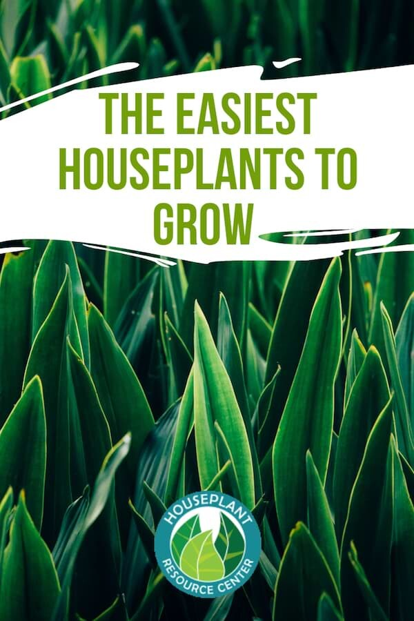 The Easiest Houseplants To Grow