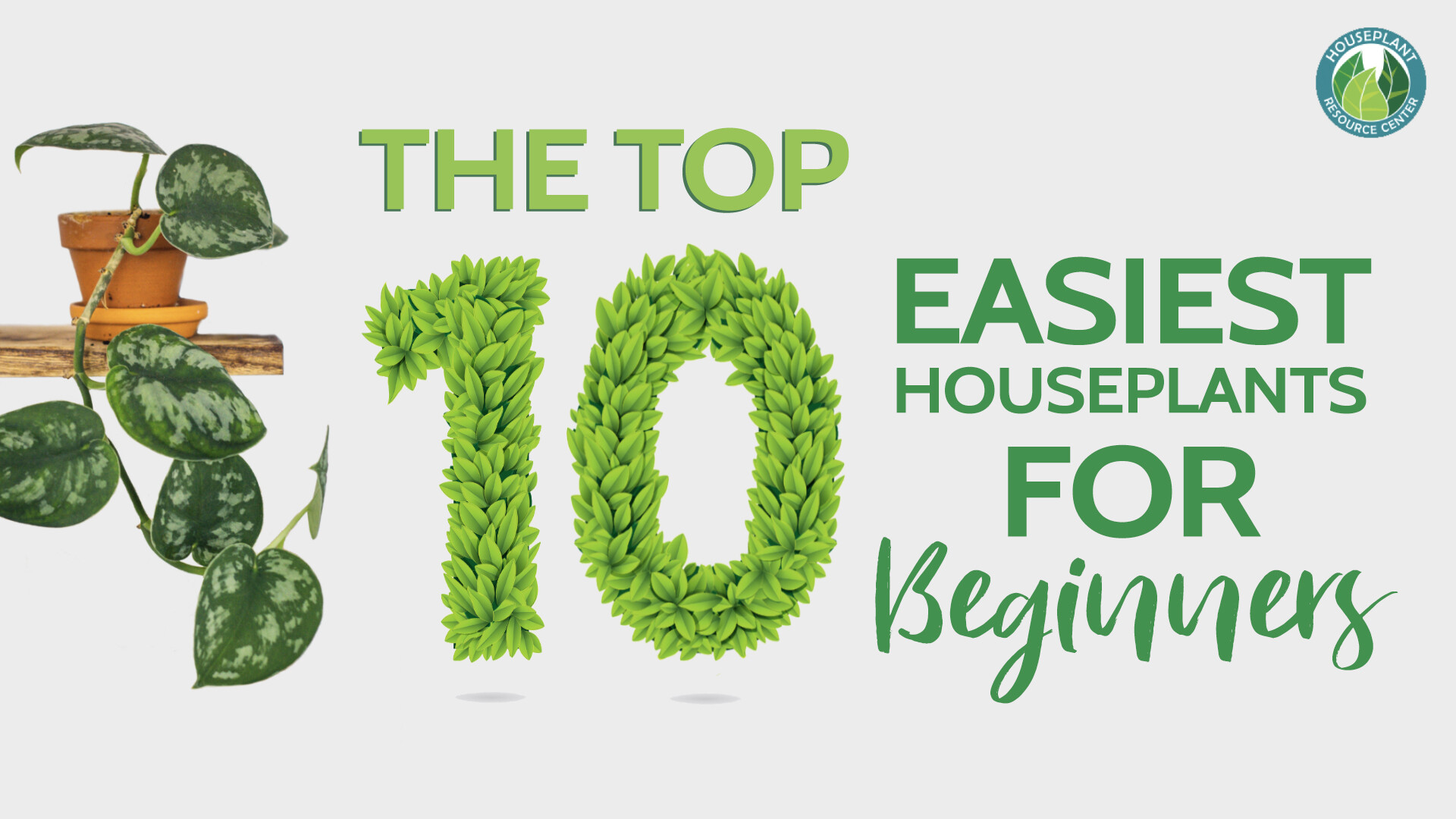 Easiest Houseplants for Beginners