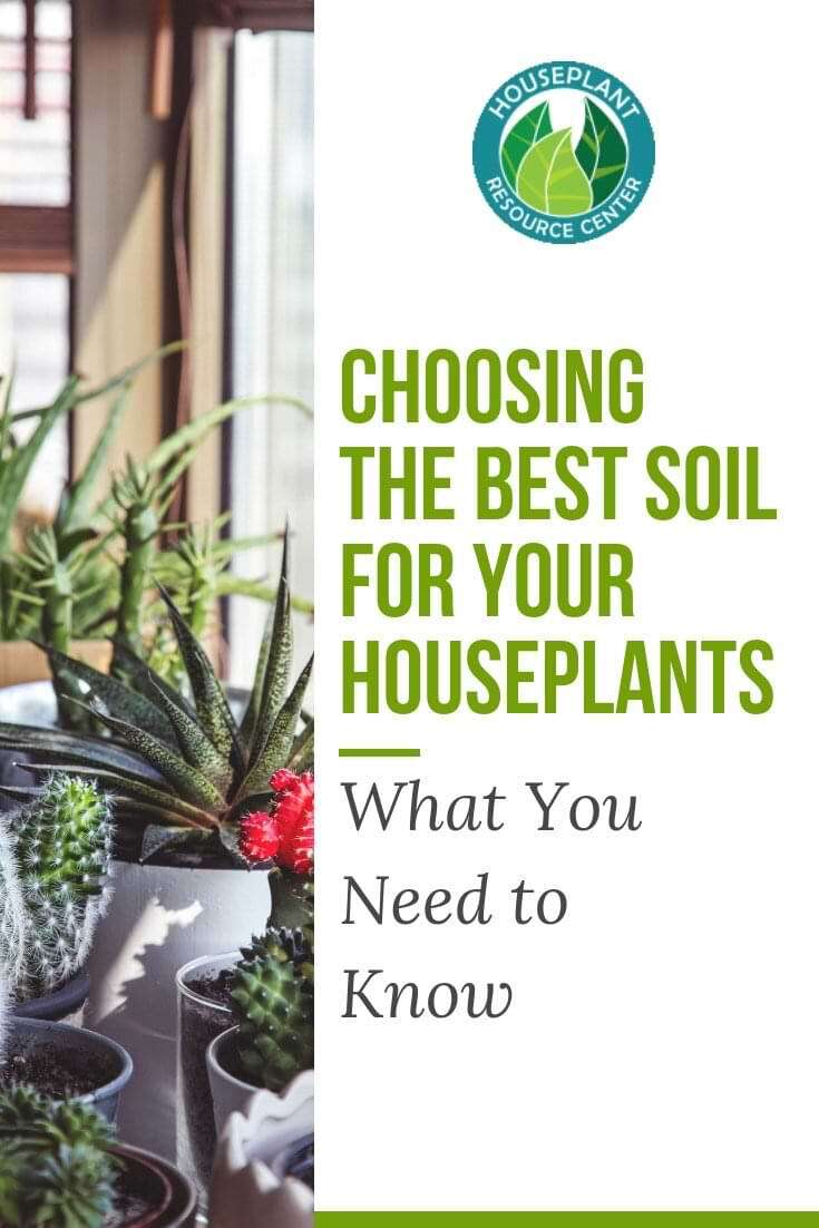 Choosing the Best Soil for Your Houseplants: What You Need to Know