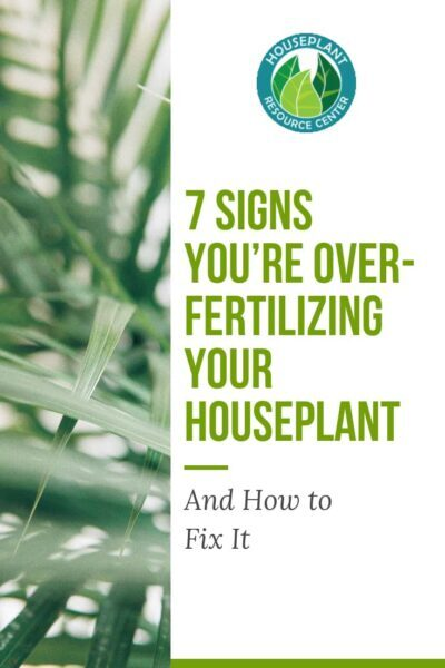 7 Signs You're Over-Fertilizing Your Houseplant