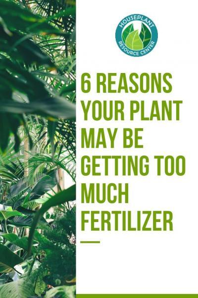 6 Reasons Your Plant May Be Getting Too Much Fertilizer