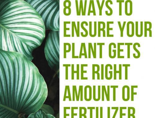 7 Ways to Ensure Your Plant Gets the Right Amount of Fertilizer