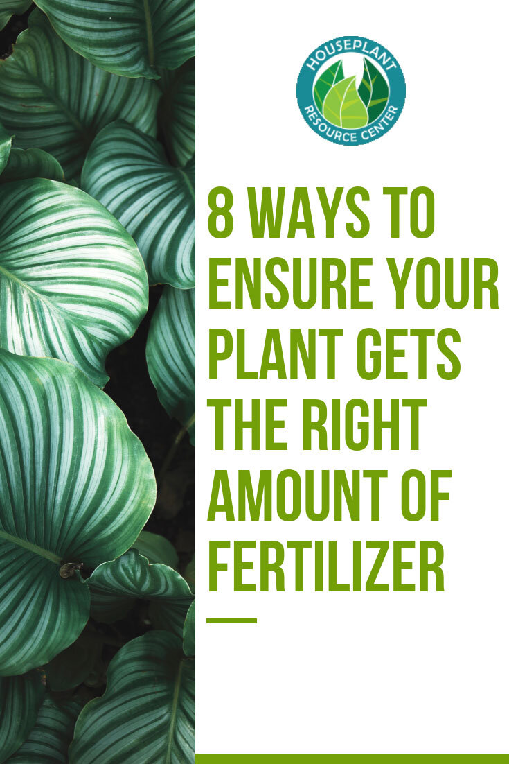 8 Ways to Ensure Your Plant Fertilizer