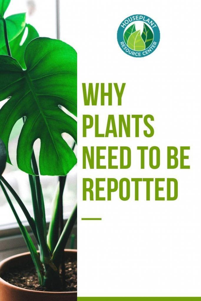 Why Plants Need to Be Repotted - Houseplant Resource Center