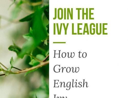 Join the Ivy League: How to Grow English Ivy Indoors