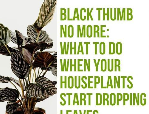 Black Thumb No More: What to Do When Your Houseplants Start Dropping Leaves