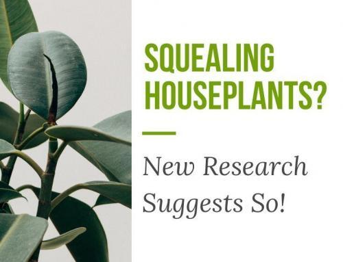 Squealing Houseplants? New Research Suggests So!