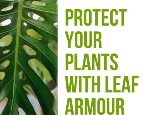 Leaf Armour Is Available: Safe Leaf Shine and Protectant for your Plants