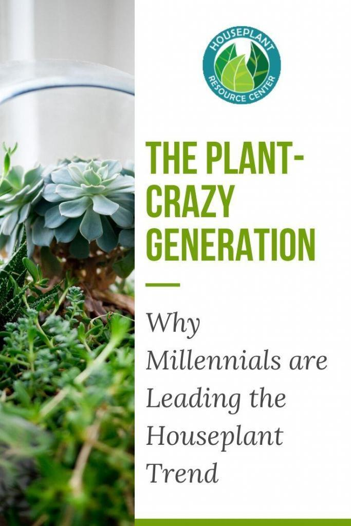 Why Millennials are Leading the Houseplant Trend - Houseplant Resource Center