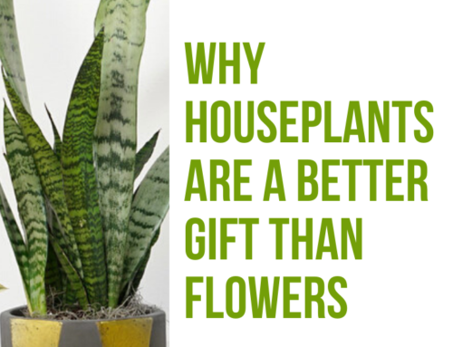 Why Houseplants Are a Better Gift than Flowers