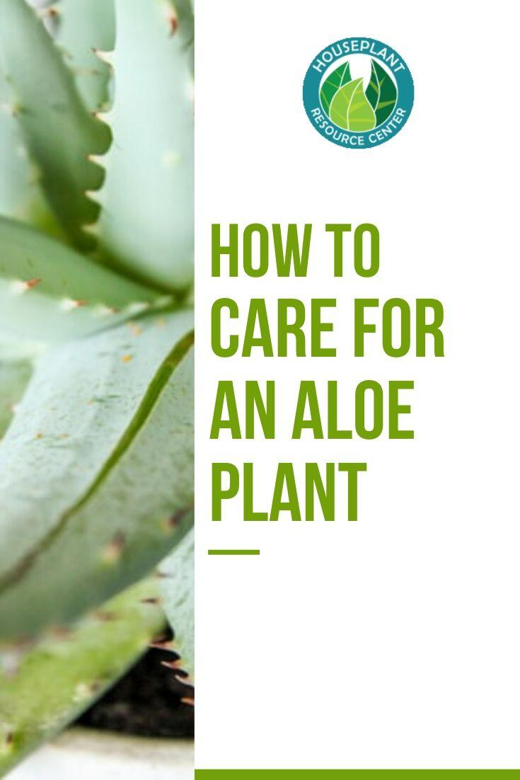 How to Care for an Aloe Plant - The Houseplant Resource Center