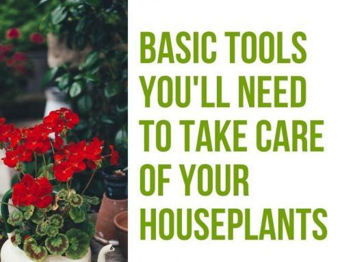 Basic Tools You'll Need to Take Care of Your Houseplants