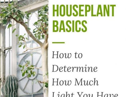 Houseplant Basics: How to Determine How Much Light You Have