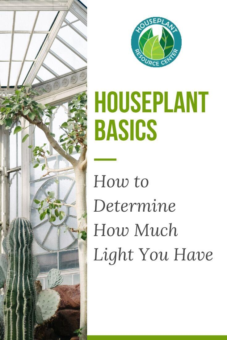 How to Determine How Much Light You Have - Houseplant Resource Center