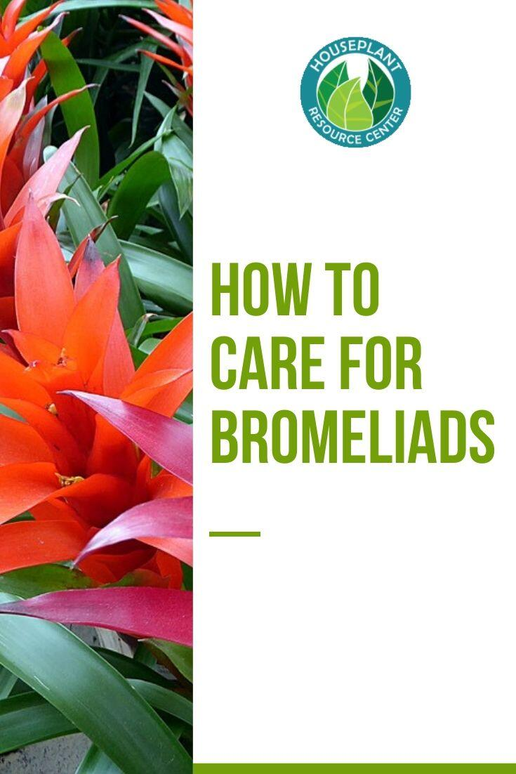 how to care for bromeliads - Houseplant Resource Center