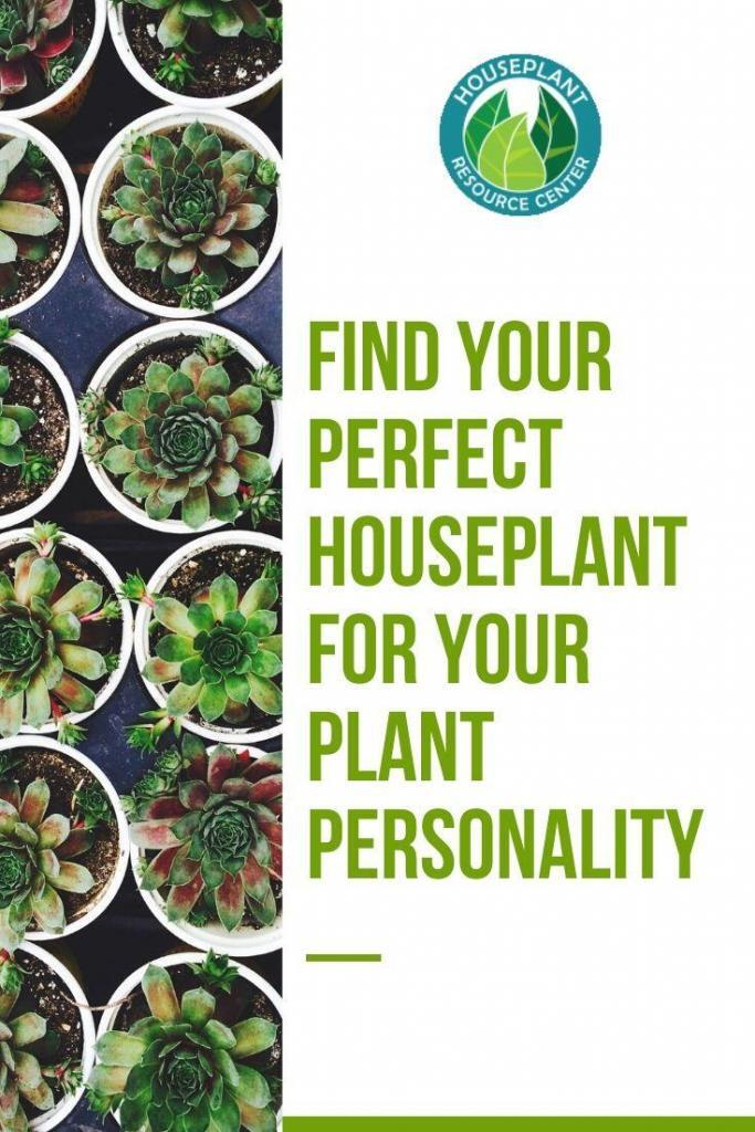 Find Your Perfect Houseplant for Your Plant Personality