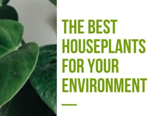 The Best Houseplants for Your Environment
