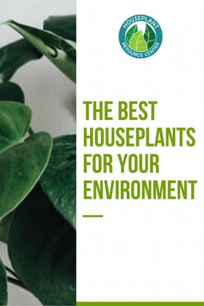The Best Houseplants for Your Environment - Houseplant Resource Center
