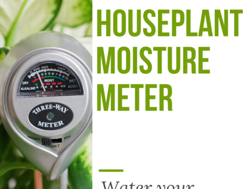 Houseplant Moisture Meter: Water Your Houseplants With Confidence