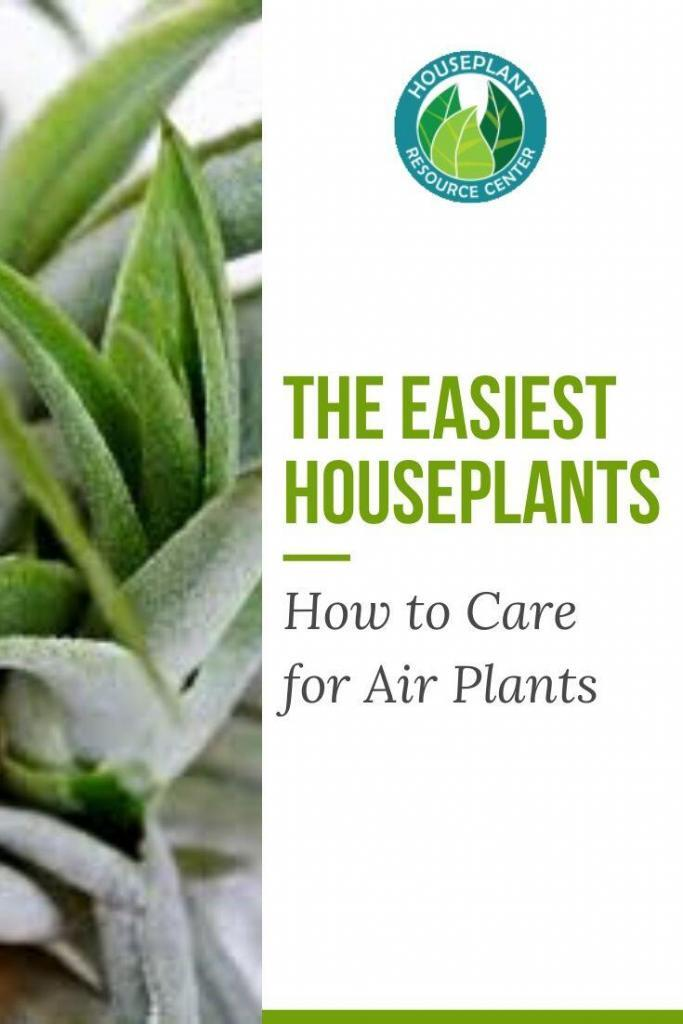 How to Care for Air Plants - Houseplant Resource Center
