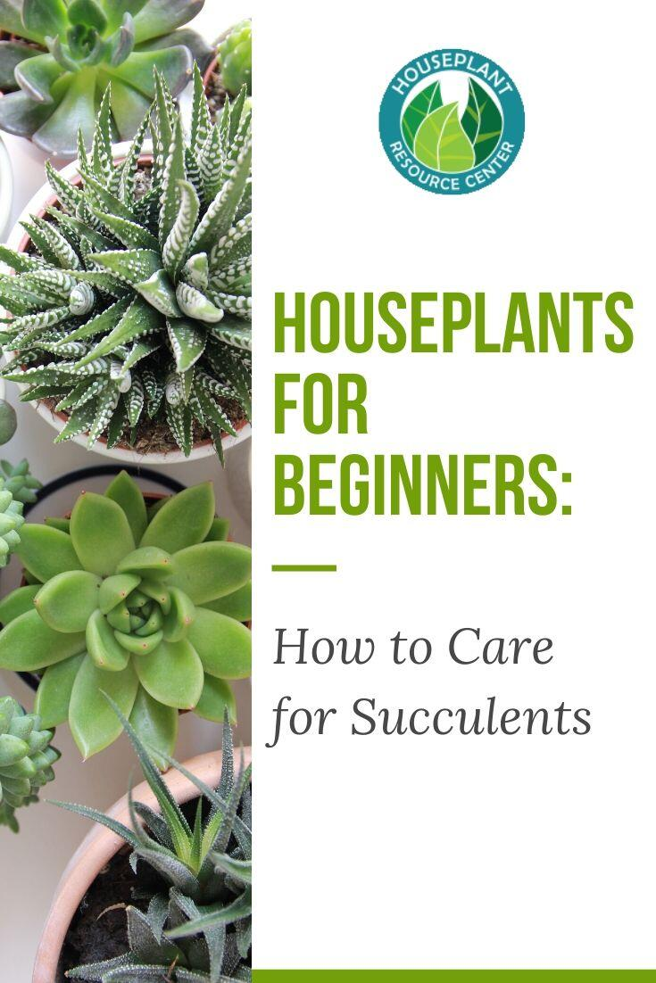 Houseplants for Beginners: How to Care for Succulents - Houseplant Resource Center