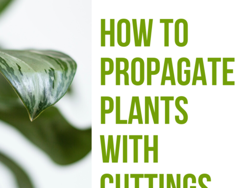 How to Propagate Plants With Cuttings