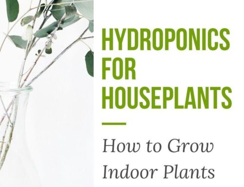 Hydroponics for Houseplants: How to Grow Indoor Plants Without Soil