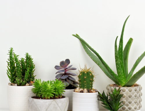 The Comprehensive Guide to Houseplants