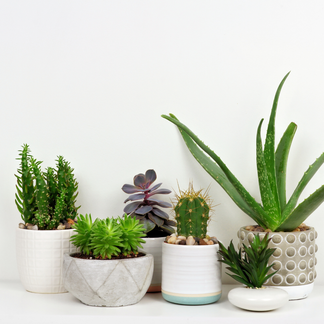 Read the comprehensive guide to houseplants. Learn the basics of houseplant care, the best conditions for your houseplants and more.