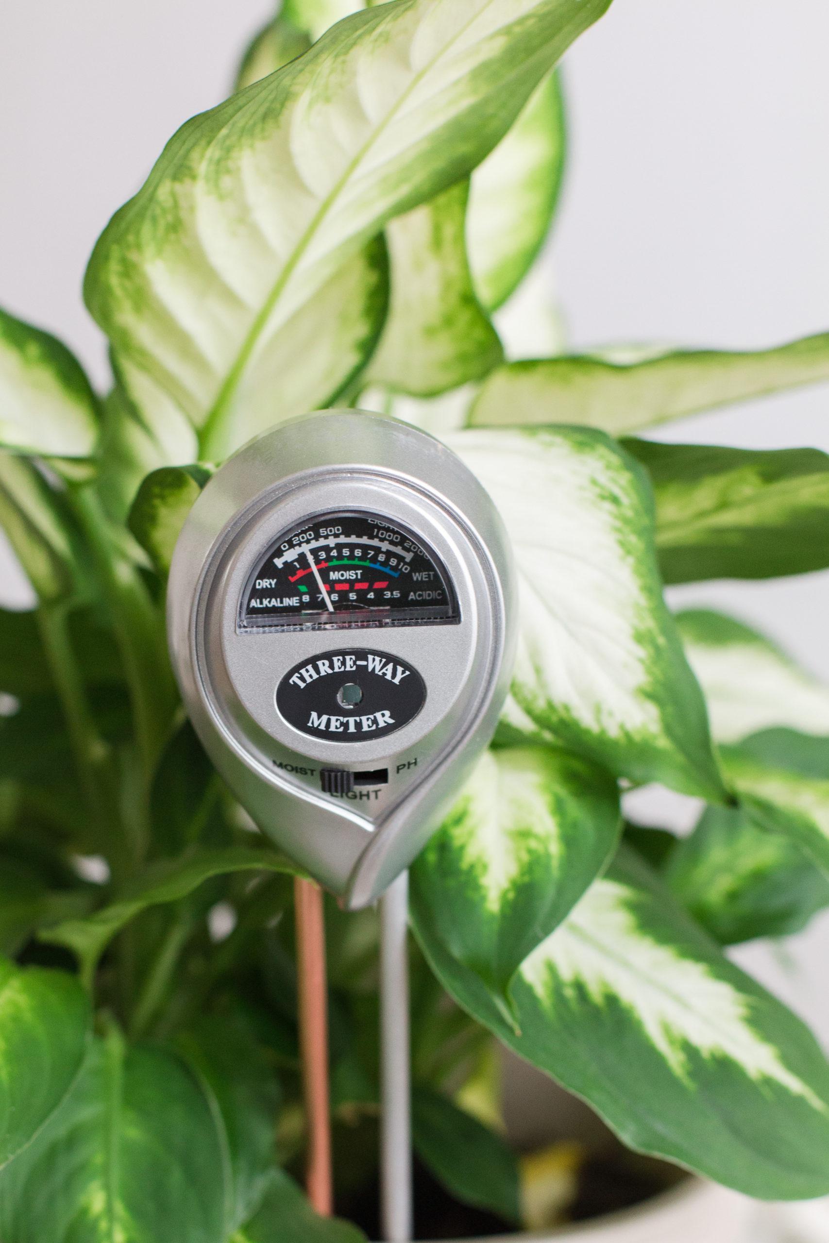 Houseplant 3-1 Moisture Meter