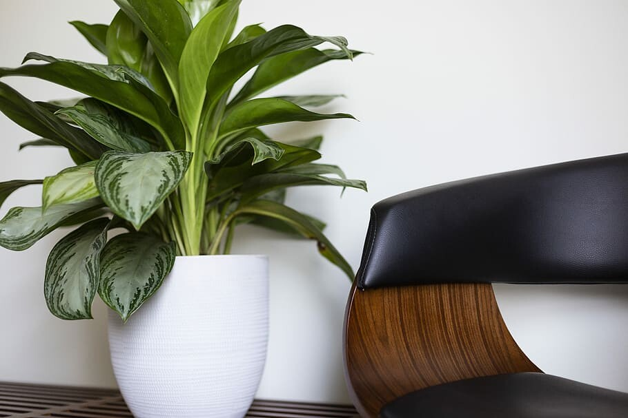 Chinese Evergreen Care