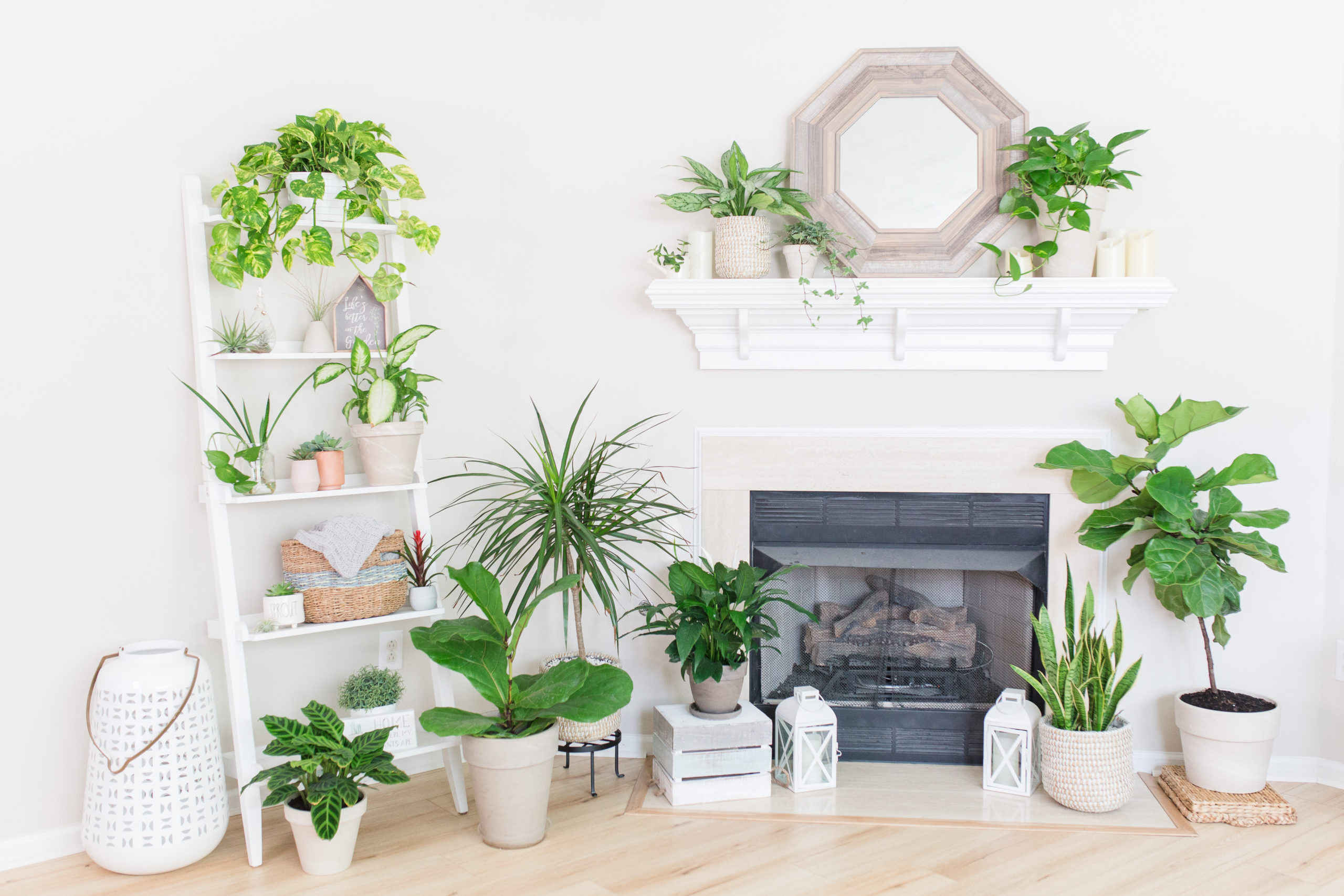 Learn the fundamentals of caring for your houseplants and what to look out for. Read more from The Houseplant Resource Center.