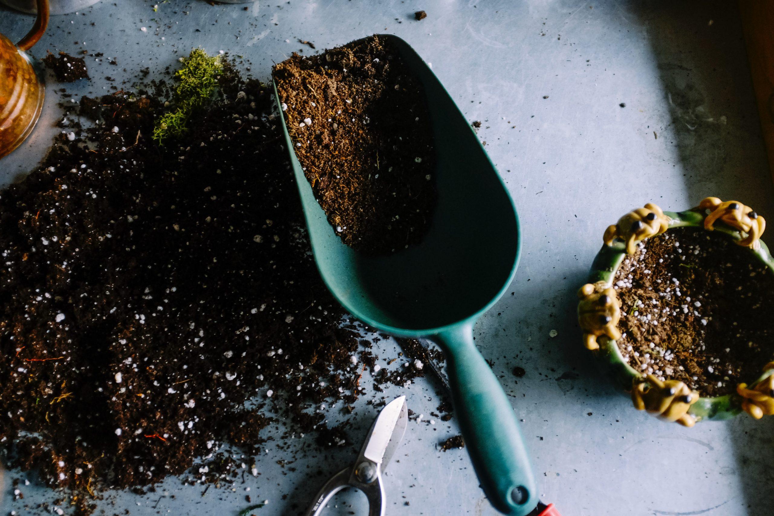 Best Soil for Majesty Palms
