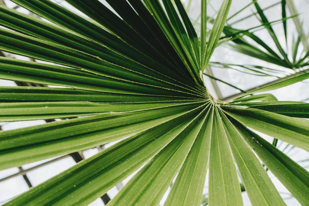 Best Majesty Palm Fertilizer