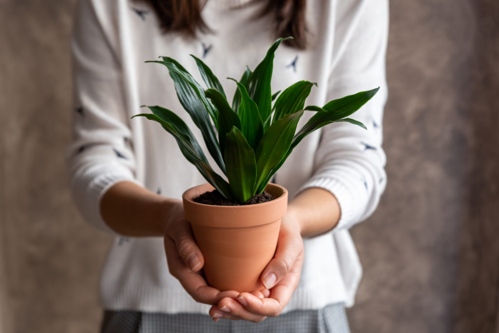 The Ultimate Guide to Dracaena Varieties