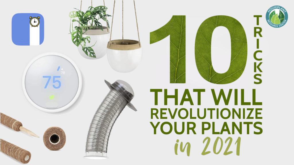 houseplants in 2021