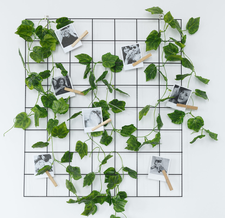 The Ultimate Guide to Indoor Ivy Varieties