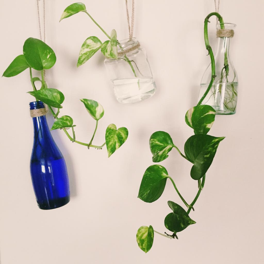 Everything You Need to Know About Pothos Pruning and Propagation