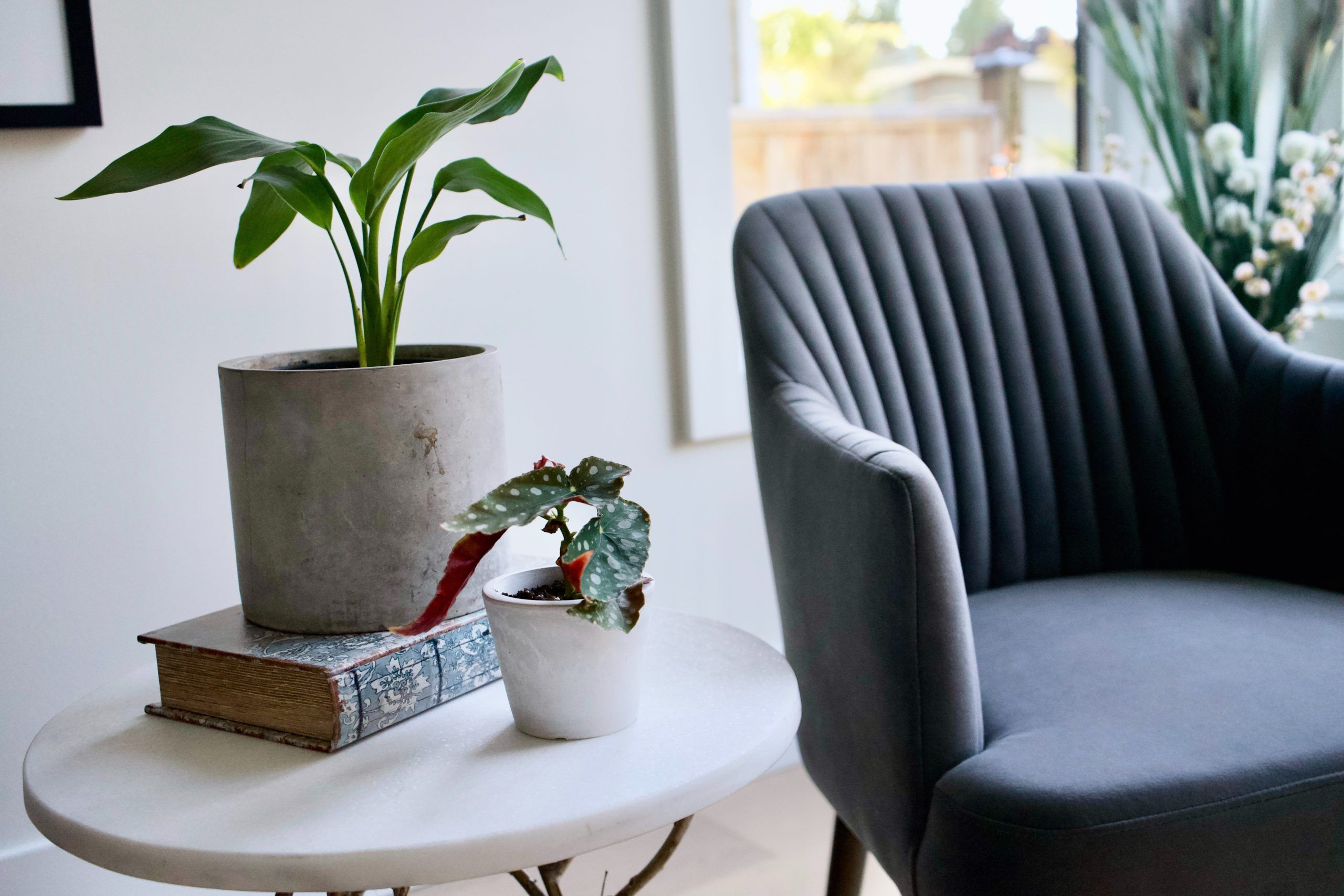 Dive into the reasons why and how plants are taking care of your mental health. Discover how plants can boost your mood and more.