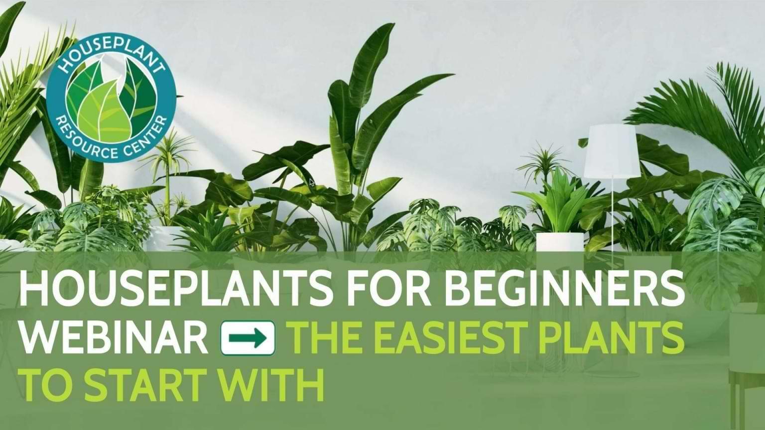 Houseplants For Beginners Webinar